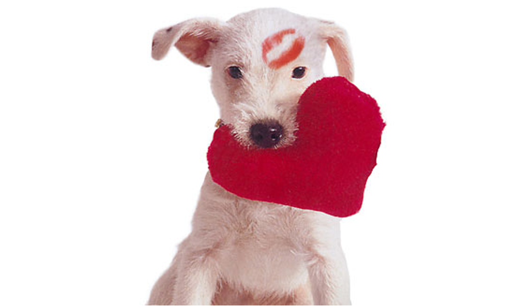 Love is in the Air…as Well as Gifts for Our Loved Ones