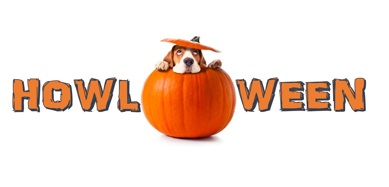 Happy Howl-oween!  Check out these boo-tiful finds!