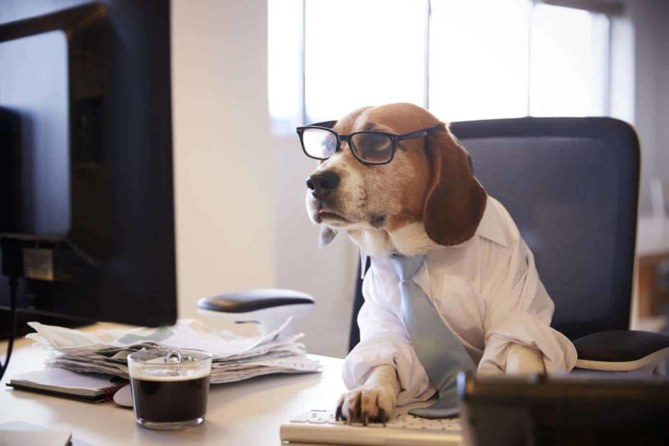 From Corporate Hog to Everything Dog